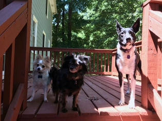 Theodore on the back deck with two of his brothers for a size comparison