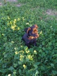 Playing in the clovers at Adopt-A-Pet